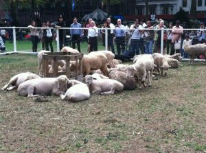 sheep in bryant park